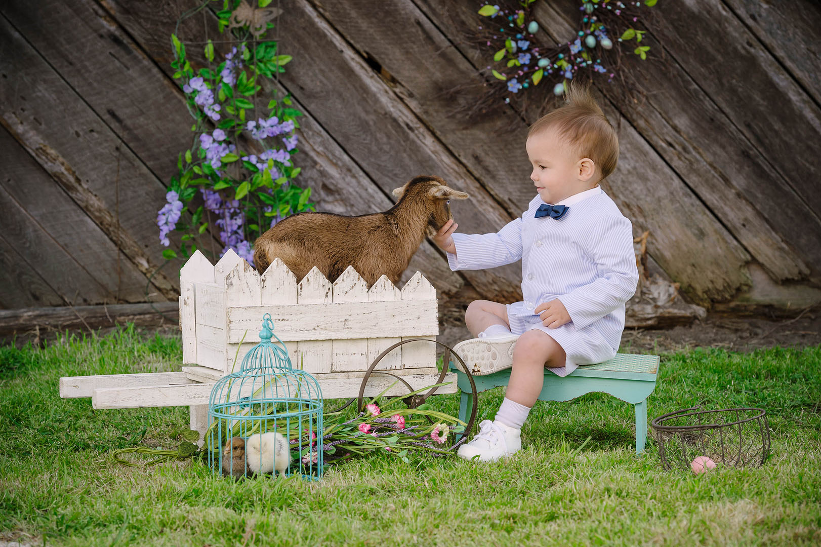 Baby Goat Spring Portrait Sessions