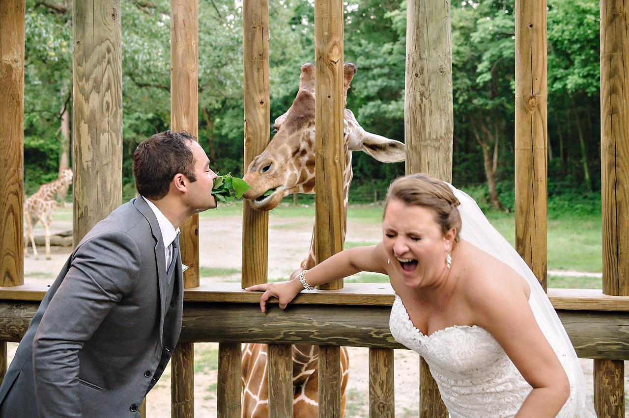 bride and groom feeding giraffes